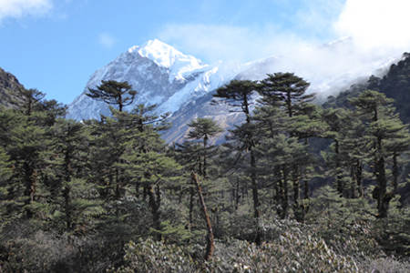 Sikkim Kanchanjunga Base camp Trek